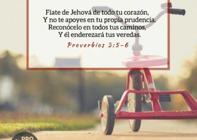 Proverbios_3_5-6