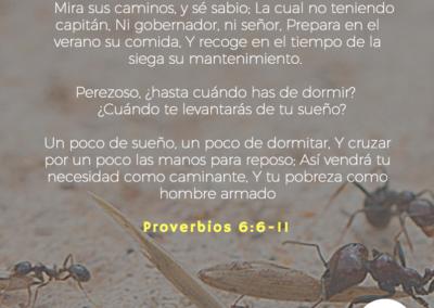 Proverbios_6_6-11
